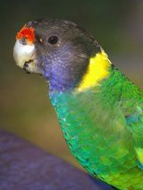 Twenty-eight Parrot