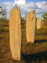 Magnetic Termite