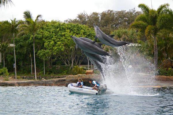 Bottlenose Dolphin | Tursiops truncatus photo