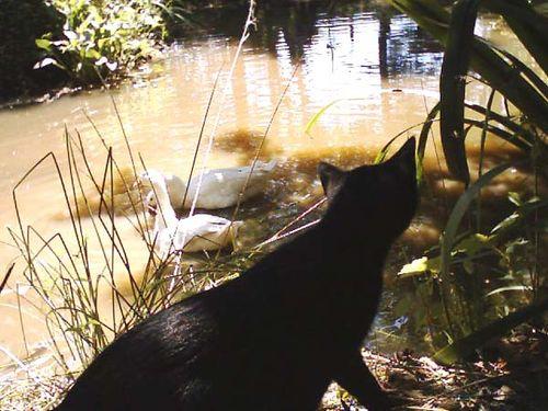 Pantherette Cat photo