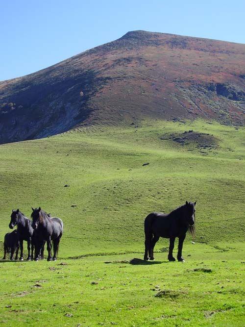 Ariegeois Pony photo