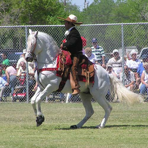 Azteca Horse photo