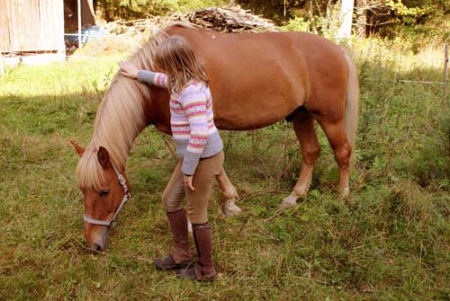 Finnhorse photo