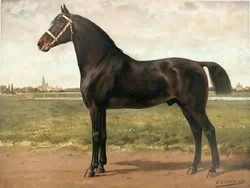 Groningen Horse photo