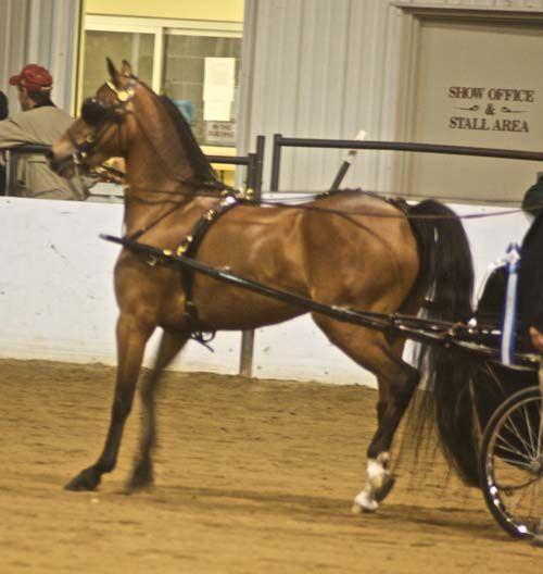 Hackney Horse photo