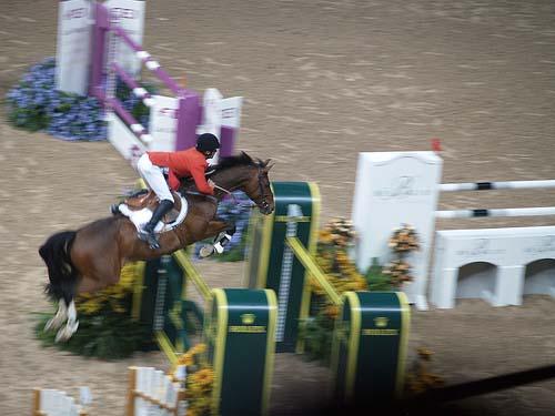 Holsteiner Horse photo