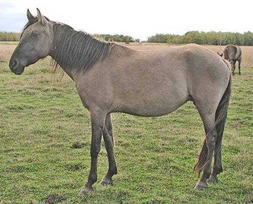 Kiger Mustang photo