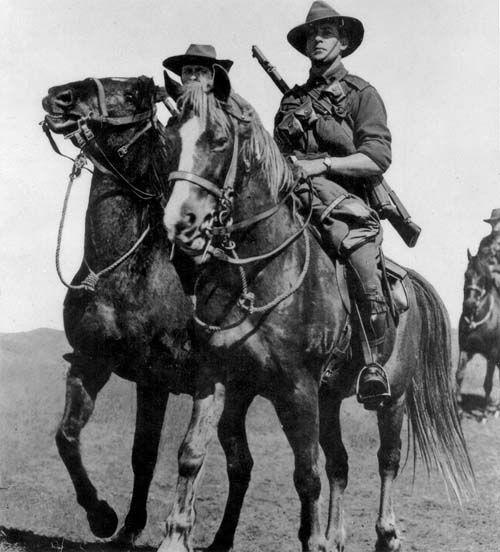 Waler Horse photo