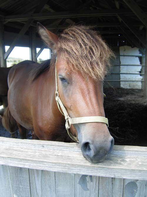 Miyako Pony photo