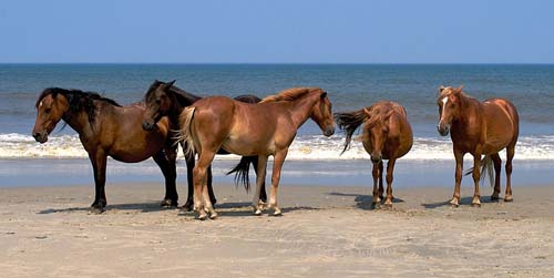 Banker Horse photo