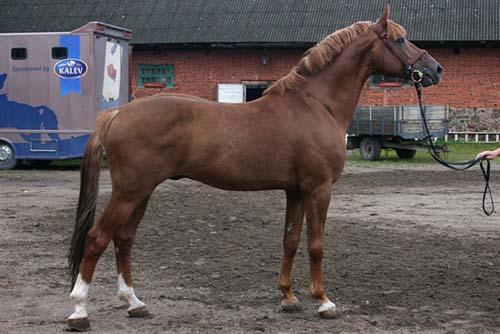 Tori Horse photo