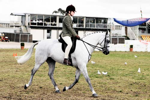 Australian Pony photo