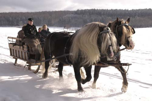 Black Forest Horse photo