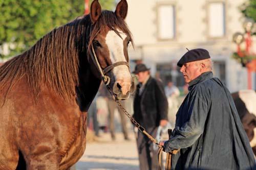 Breton Horse photo