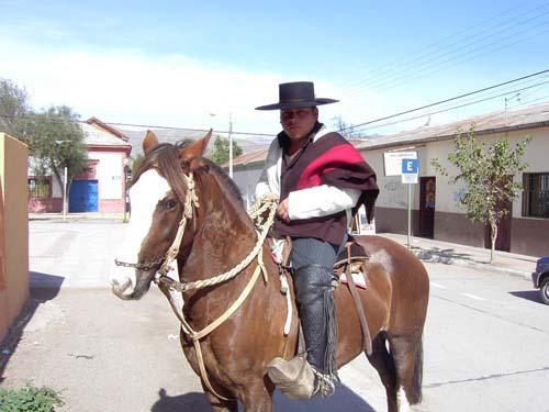 Chilean Horse photo