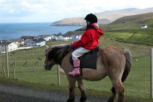 Faroe Pony photo
