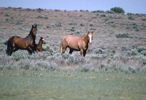 Mustang photo