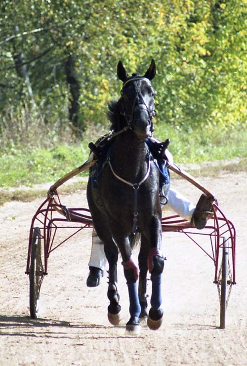 Russian Trotter photo