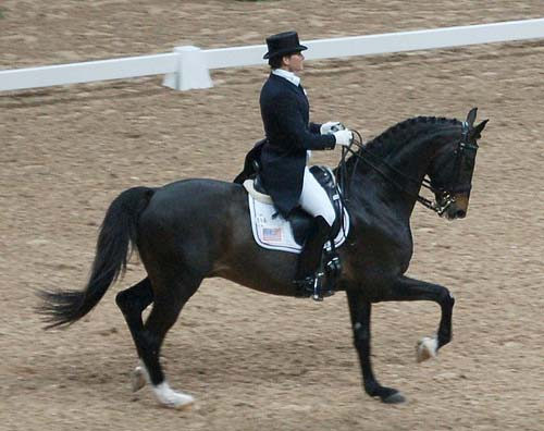 Swedish Warmblood photo