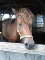 Miyako Pony