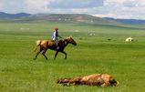Mongolian Horse