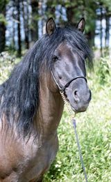 Vyatka Horse
