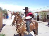 Chilean Horse